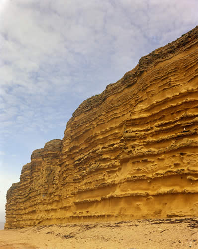 The Bridport Sand Formation at Burton Bradstock showing stronger and weaker beds. BGS Photo P005794 taken in 1972.