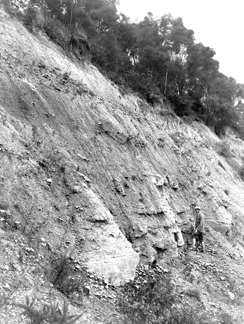 The backscarp of Lloyd's Coppice landslide from 1924.