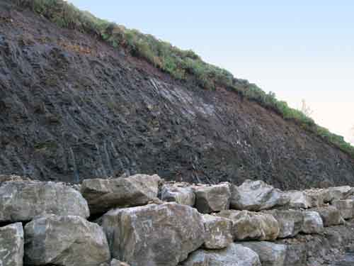 Blubberhouses 2. Thin layer of superficial deposit and bracken overlying the bedrock.