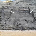Figure 2 Falls from beneath a thin limestone bed in the lower cliff of the Black Ven Marl Formation.