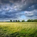Harvest grain cereals field. Image by Albrecht Fietz from Pixabay