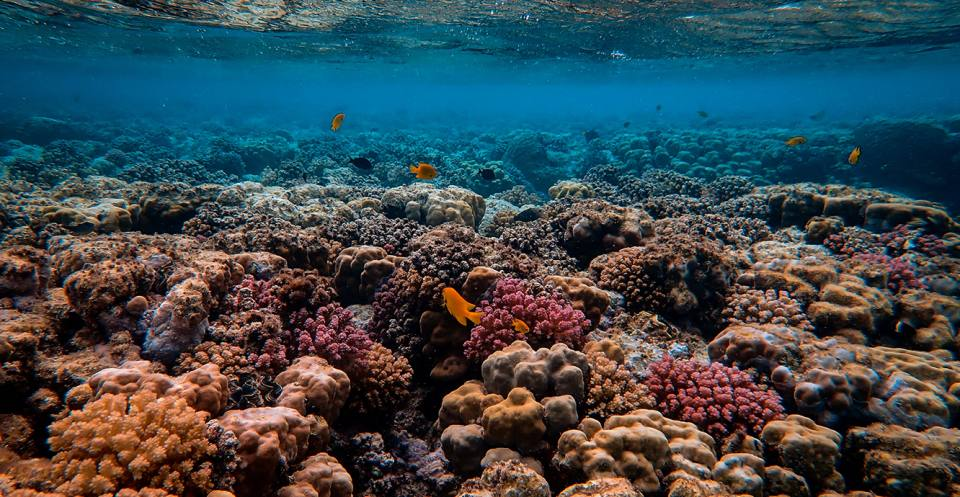 Coral reefs live in tropical waters. They need a particular temperature, a specific depth of water and the right amount of light. If the depth of the water changes just a fraction, they cannot survive.