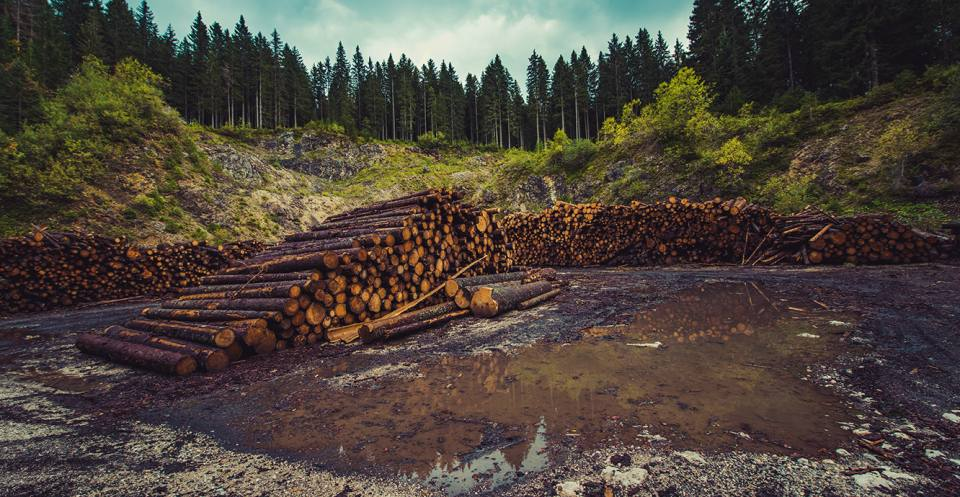 Agriculture is estimated to be the main driver for around 80% of deforestation worldwide.