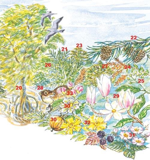 The Earth blooms in the Palaeogene forest (about 50 million years ago): mangroves (<em>Bruguiera</em> 20 and <em>Nipa</em> 21) grow in wet areas. Inland, <em>Pinus</em> (22), <em>Platycarya</em> (23), <em>Nothofagus</em> (24), <em>Cinnamomum</em> (25), <em>Meliosma</em> (26), <em>Corylopsis</em> (27) and <em>Mastixia</em> (28) grow with a ground cover of ferns. Flowering plants flourish such as <em>Magnolia</em> (29), <em>Oncoba</em> (30), <em>Rubus</em> (31), <em>Hibbertia</em> (32) and <em>Uveria</em> (33). Birds and mammals are now widespread.