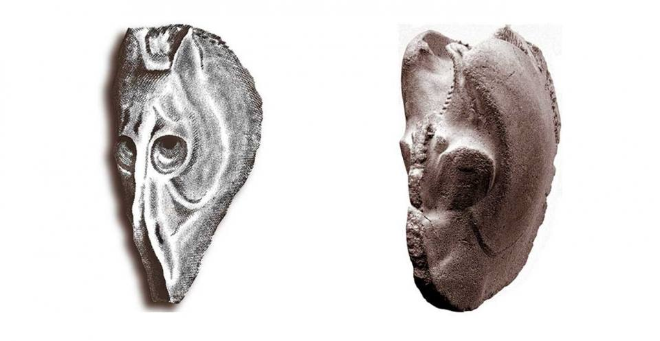 "l""Horse's head"" (left), The bivalve Myophorella (right)."