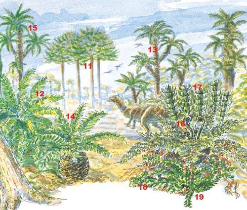 Wealden woodlands: Mesozoic plants in an early Cretaceous landscape (130 million years ago): conifers (<em>Pseudofrenolopsis</em> 11), cycads (<em>Nilssonia</em> 12), cycad-like plants (<em>Otozamites</em> 13) and (<em>Pseudocycas</em> 14), and tree ferns (<em>Tempskya</em> 15) abound. Small ferns like <em>Weichselia</em> (16) form the undergrowth. Horsetails (<em>Equisetites</em> 17), non-vascular liverworts (<em>Hepaticites</em> 18) and clubmosses (<em>Selaginellites</em> 19) grow in the wetter areas. The herbiverous dinosaur <em>Iguanadon</em> feeds on the Wealden plants.
