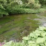 River with algae