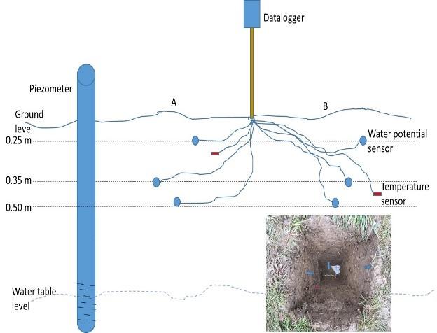 Soil moisture data