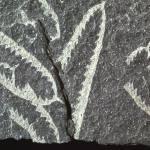 Plant p549553