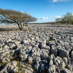 Limestone pavement, Cumbria