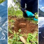 Soil core sampling