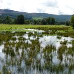 Floodplain wetland, Eddleston