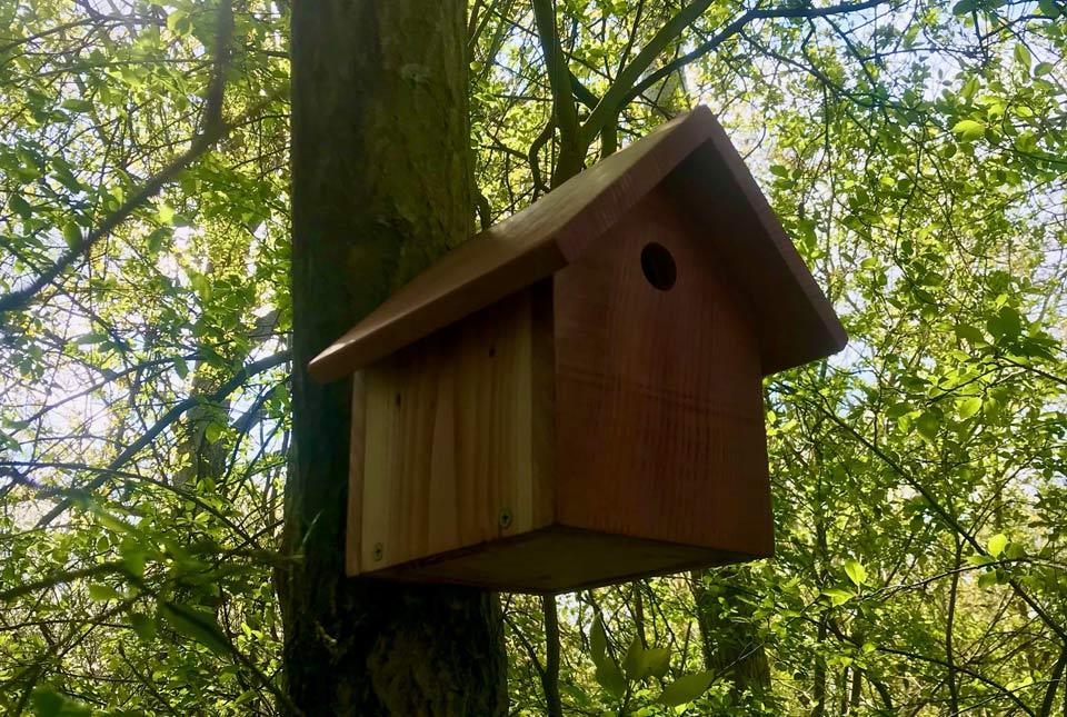 birdbox_web